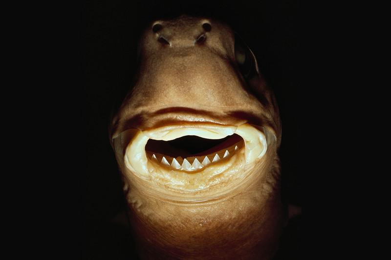 10 amazing shark breeds elite facts