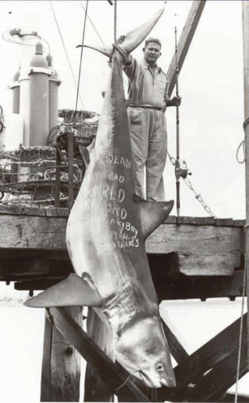 World Record Tiger Shark on Bullbuster Fishing Lines - YouTube |Worlds Largest Bull Shark